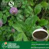 High Quality Trifolium pratense Extract-Isoflavone 40% Min Hplc