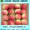 Hot sale Hight quality gala apple
