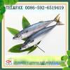 Frozen mackerel bait