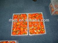 Fresh Sweet Yongchun Ponkan&Lugan