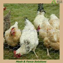 Hexagonal Wire Mesh chicken house