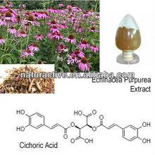 Echinacea Purpurea Extract for Antibacterial and Antiviral