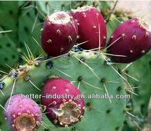 Cactus essential oil distillation equipment on sale