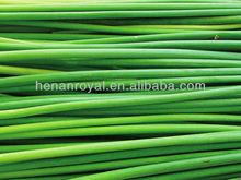 2013 new crop fresh 20-30cm garlic sprout