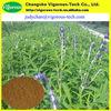 Natural 20% Forskohlin coleus forskohlii extract powder