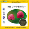 GMP Manufacturer Supply Red Clover Herb Extract
