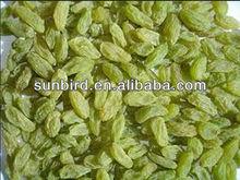 Dried raisin/5cm delicious fresh/ importers raisins /dried fruit