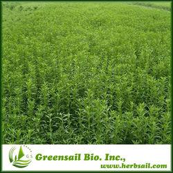 2014 Extraction Steviol Glycosides / Stevia Leaf P.E