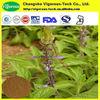 Natural 20% Forskohlin coleus forskohlii extract