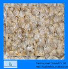clam supply