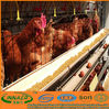 Chicken farming with high quality (Manufacturer ISO9001-2000)