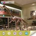 tamaño original fósiles de dinosaurios para la venta