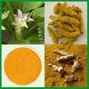 Food Grade Turmeric Extract - Curcumin 95%
