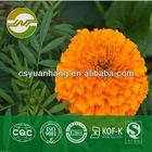 marigold extract lutein powder 5%-80% HPLC