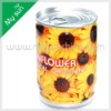 Flower in mini tin, metal tin can flower,can plant pot with sunflower seeds