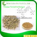Amostras grátis de produtos de saúde tribulus terrestris extrato em pó