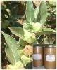 Ashwagandha Indian Ginseng Extract