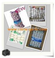 Chinese Good Quality Natural Garlic