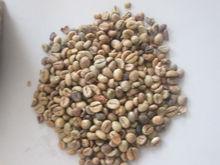 Premium Robusta coffee (skype:visimex02)