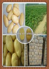 Certified HALAL/ GAP 2015 Crop FARM FRESH POTATO-Table Potato, Fries Potato