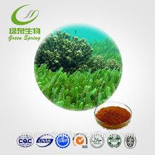 GMP certificate Fucoidan 10%~90%,seaweed extract