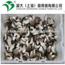 export grade mini oyster mushroom