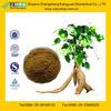 GMP Factory Supply Kudzu Root Extract