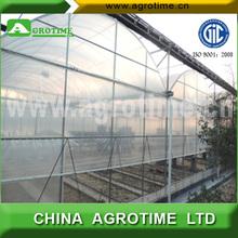 setoseหน่อไม้ฝรั่งเติบโตเรือนกระจกสำหรับการขายในประเทศจีน
