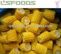 congelados dulce mazorca de maíz