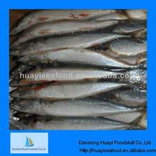 mackerel fish exporters