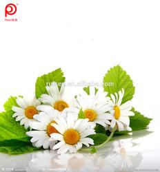 100% Natural Echinacea angustifolia Herbal Extract,P.E