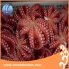 live octopus for sale