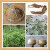 Herbal Extract Radix Sophorae Tonkinensis Extract,Tonkinensis P.E