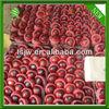huaniu apples exporter
