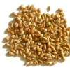 Indian Milling Wheat