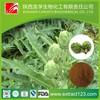 best price jerusalem artichoke powder