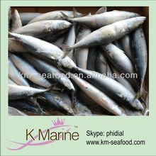 Ocean fresh seafood frozen mackerel