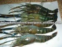 Las langostas, camarón tigre negro, camarones vanamei, scampi procedentes de vietnam