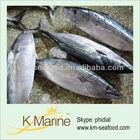 Pacific marine fish export sarda tuna