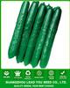 CU11 Greenstar f1 hybrid cucumber seeds, hybrid vegetable seeds for planting