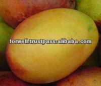 Fresh Mango ( Kent , Keitt Zebdia, Taymor, Mabroka, Fons, Hindi, Aweas )
