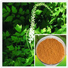 Natural 2.5% 5% 8% Triterpene Glycosides Black Cohosh Extract