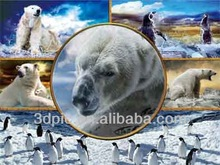 2014 new design 3d polar bear pictures for wall decoration