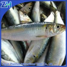 frozen fresh sardines on sale