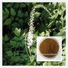 Herb Medicine Black Cohosh Extract Powder