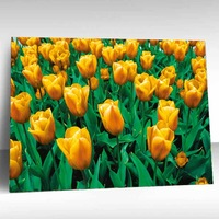 beautiful 3d pictures of yellow tulip flowers frame