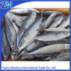 Block frozen chub mackerel whole round