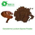 salvaje polvo de ganoderma lucidum reishi extracto de café