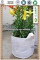 Jardín siembra de la flor olla