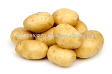 Hot sale fresh potato crops year 2015 very reduce price buyer for India